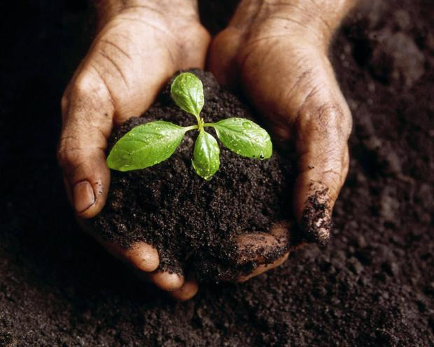 Planting-is-Good-for-You-full