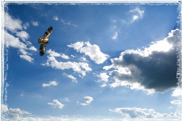 eagle1-1024x682