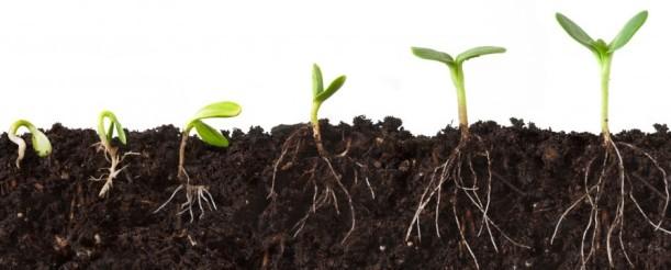 seeds growing